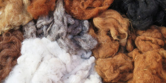 Naturalne włókno alpak